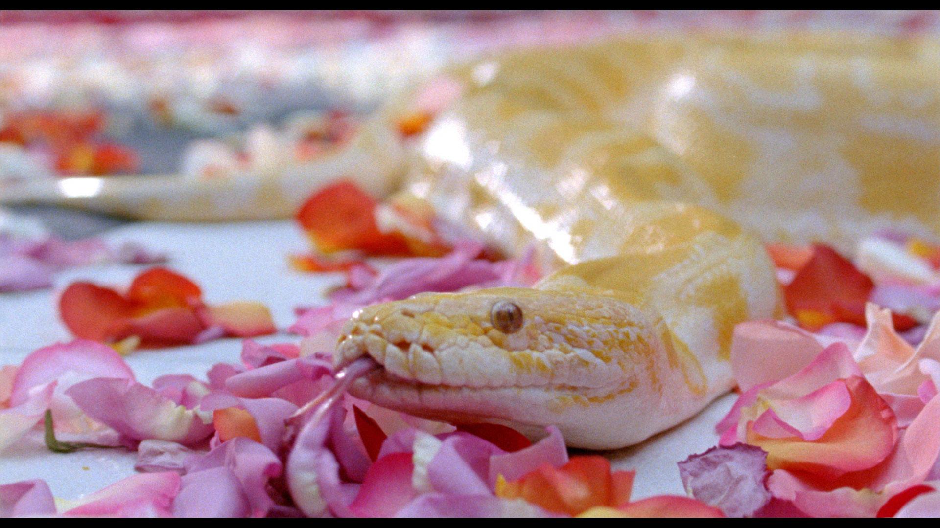 Film-Still_-Cloud-of-Petals-Snake.jpg
